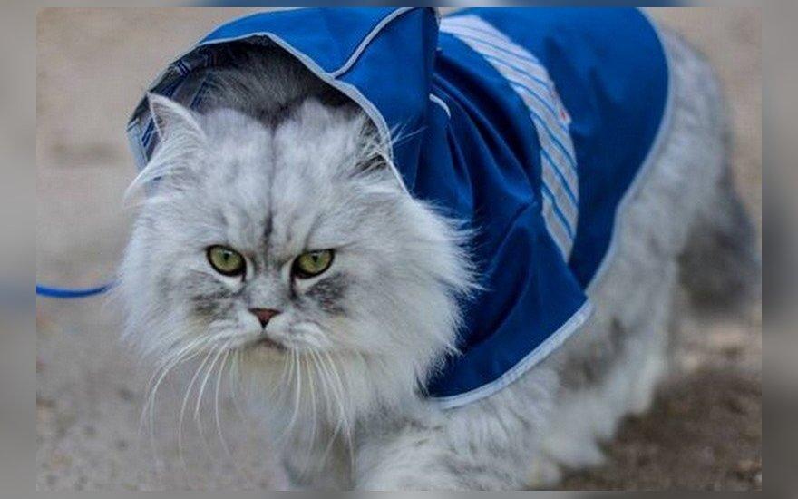 """Neįtikėtino grožio <span style=""""color: #c00000;"""">""""kačių karalius""""</span> sužavėjo tūkstančius"""