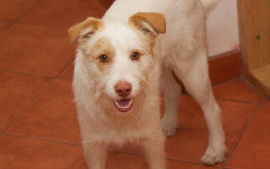 Panevėžyje dingo šunelis