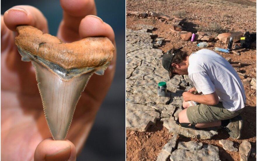 Mokslininkai netikėtai nustatė, kad rykliai buvo pavojingai priartėję prie visiško išnykimo ribos ir vis dar nėra atsigavę po šio įvykio.
