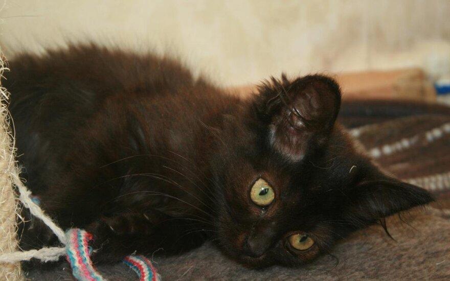 Kika – šokoladinė mažylė