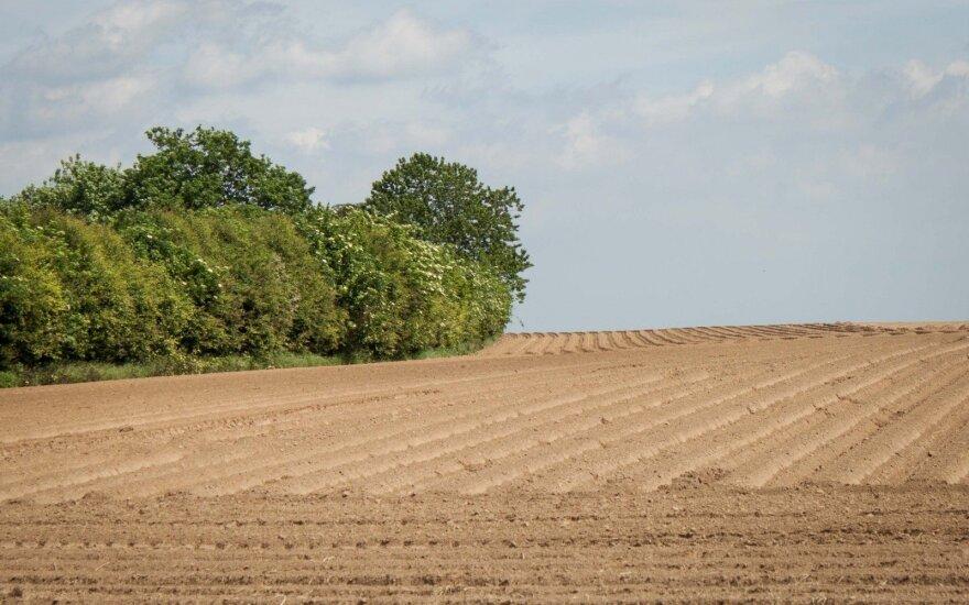 Ūkininkai apie pavasarį: atrodo, kad pasėliai lenda atgal į žemę