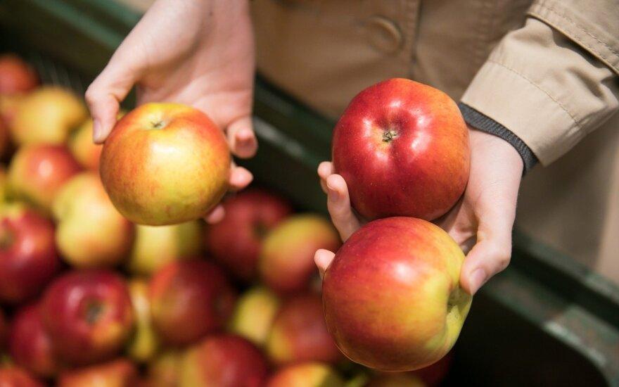 Lenkai diktuoja kainas ir obuolių supirkėjams