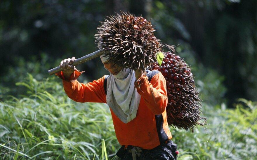Dėl mūsų kasdienių įpročių iškertamos ištisos plantacijos: tikroji pamėgtos kosmetikos ir maisto produktų kaina