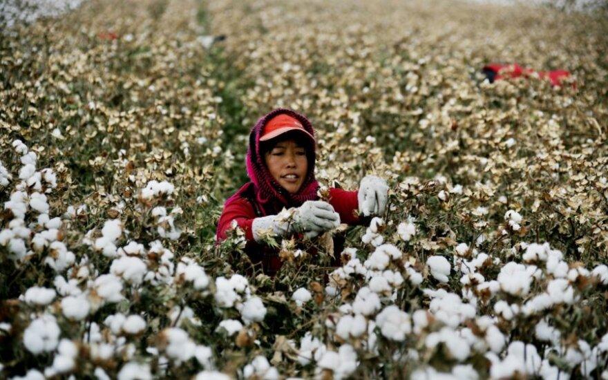 Kinijos žemės ūkio mokslų akademijos Pekine specialistas Kongming Wu su kolegomis įvertino Bt medvilnės, genetiškai modifikuotų augalų, kurie patys gamindami pesticidus apsisaugo nuo gelsvapilkio saulinuko lervų, poveikį aplinkiniams ūkiams.