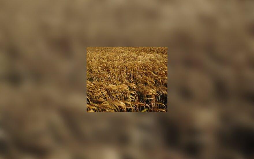 Grūdai, žemės ūkis