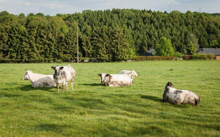 Žemės ūkio reikalų tyrimo iniciatyva įstrigo Kaimo reikalų komitete