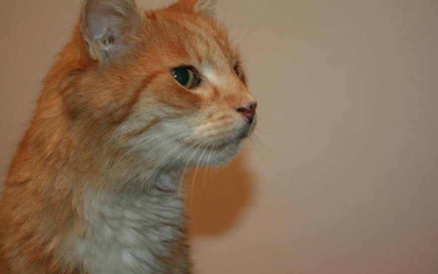 Katinėlis, kurį turėjo nužudyti: prašome pagalbos