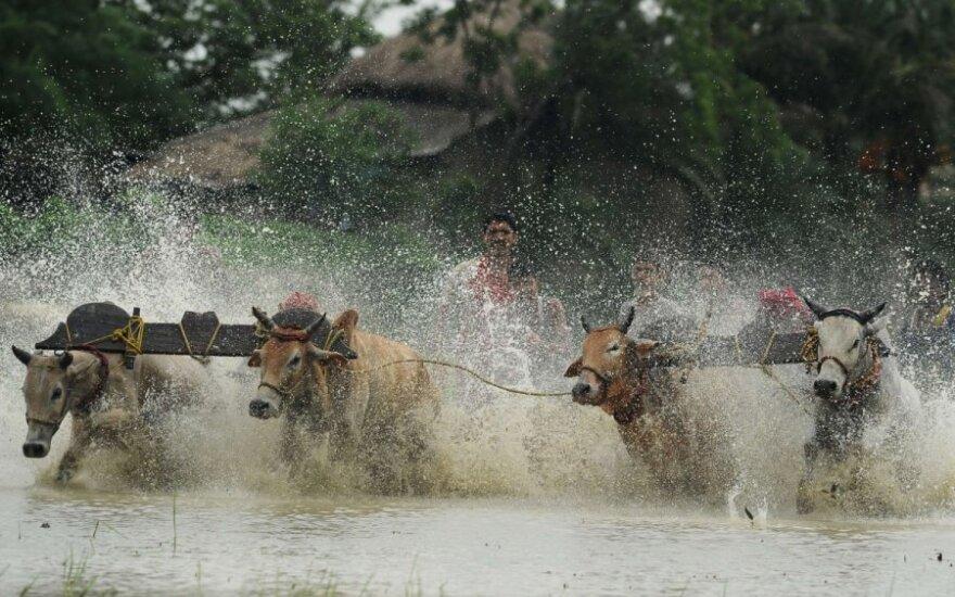 """Indiją nusiaubė Himalajų """"cunamis"""""""