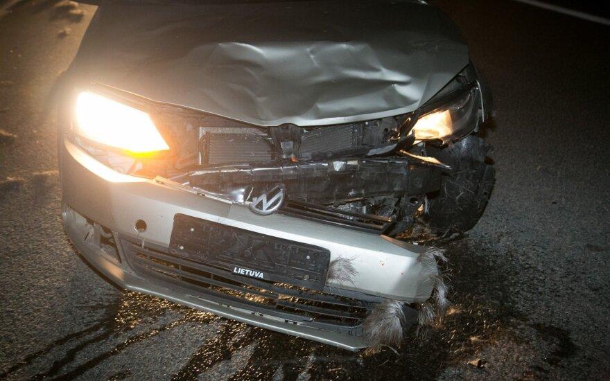 Kelyje Vilnius-Panevėžys į kelią išbėgęs briedis sukėlė masinę avariją