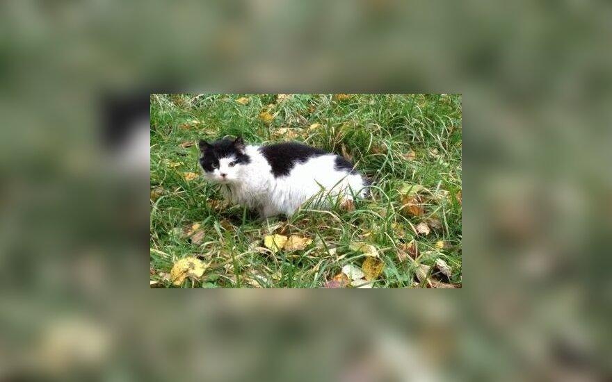 Išgelbėkite garbaus amžiaus katytės gyvybę