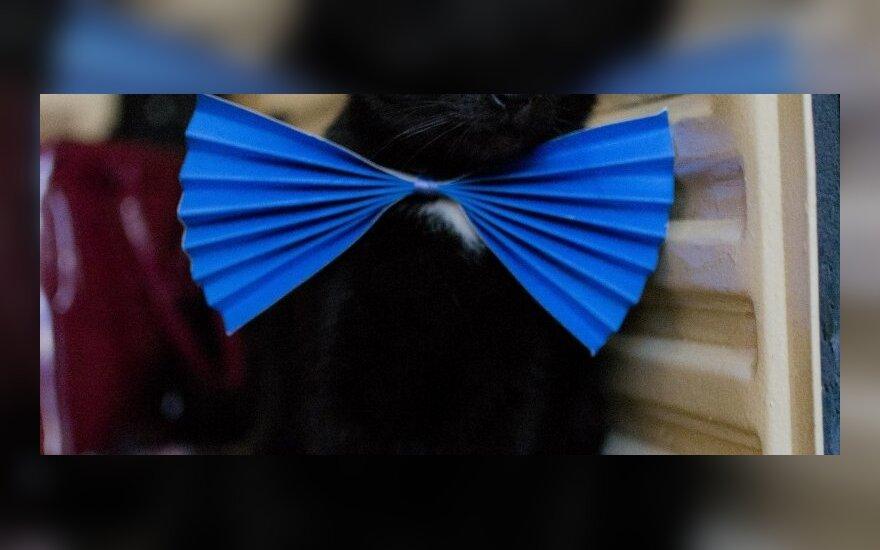 Priglaudusi 11-os metų katiną nepasigailėjo