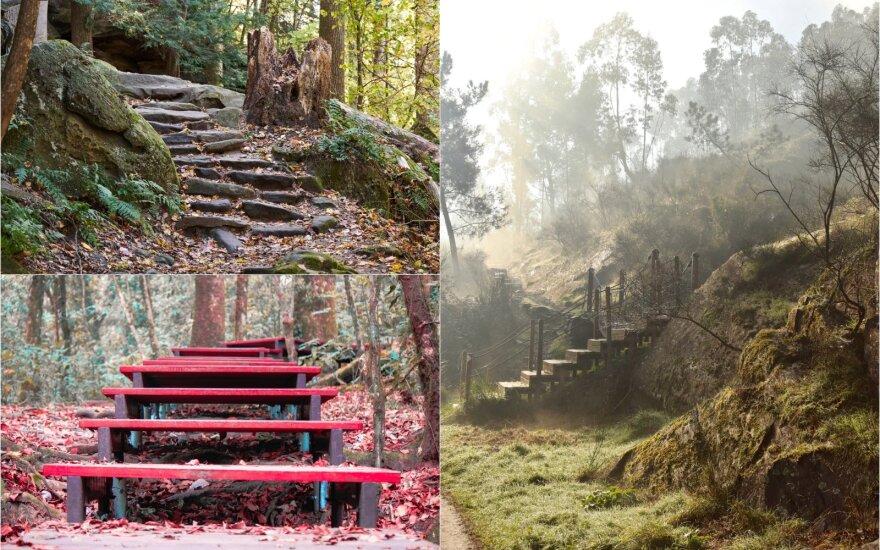Paslaptingi laiptai gamtoje.