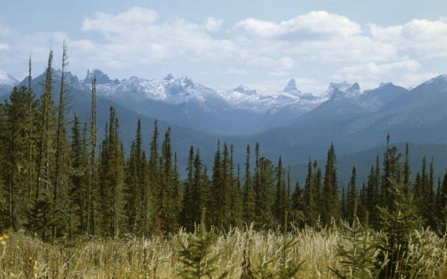 Gaisrai Sibire sunaikino 834 tūkst. hektarų miško