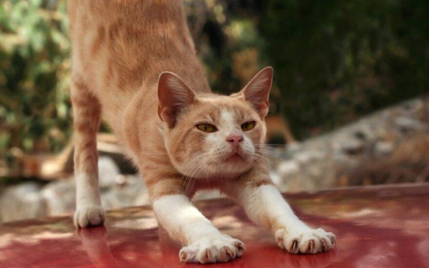 Išmokykite katę galąsti nagus ne į baldus