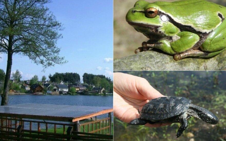Ančios ežeras Veisiejuose, medvarlė ir balinis vėžlys