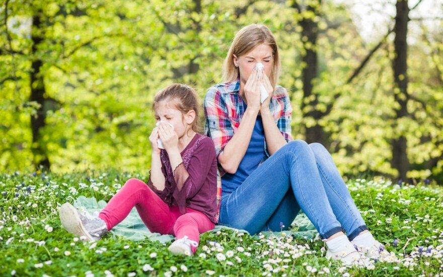 Mokslininkė: žiedadulkėms alergiškų žmonių tik daugės