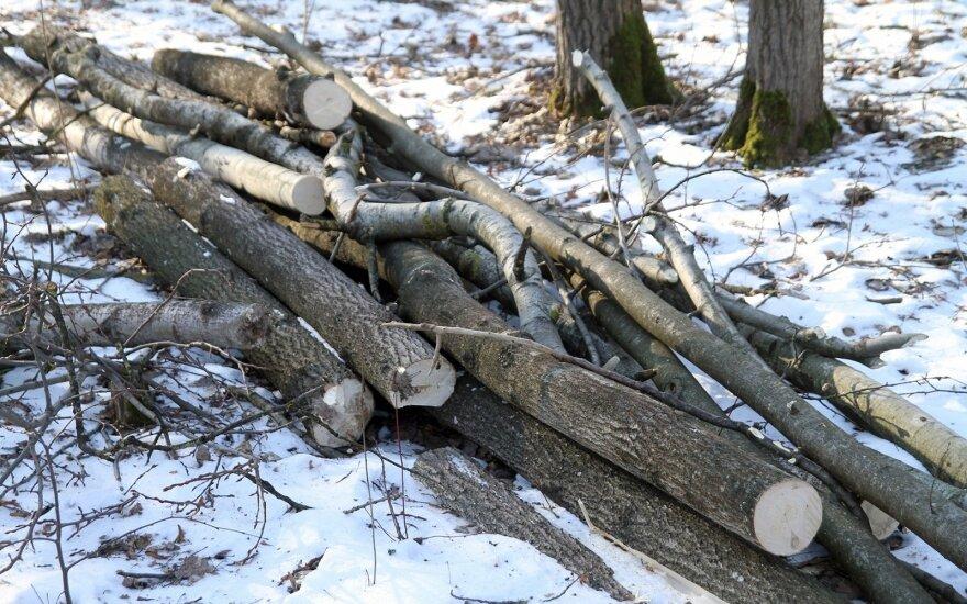 Alytuje vagys iš sodybų grobia medžius