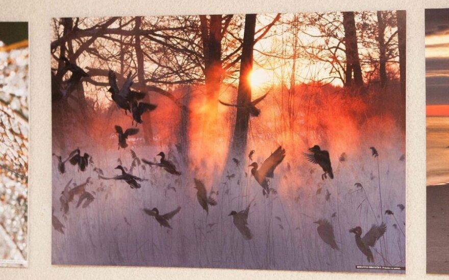 """Konkurso """"Gintarinis žaltys 2014""""  kviečia siųsti gamtos nuotraukas"""