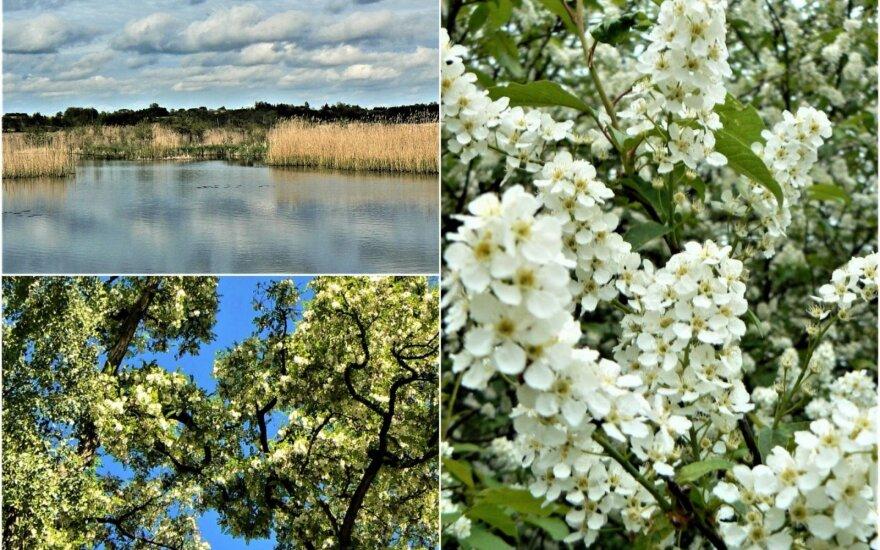 Paskutinė gegužės diena: pasigėrėkime iškeliaujančio pavasario akimirkomis