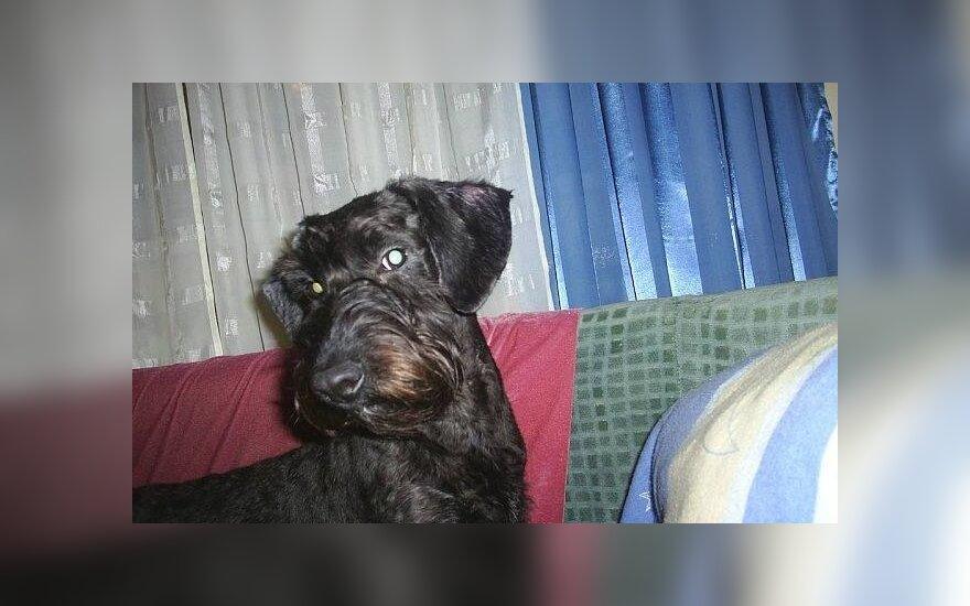 Klaipėdoje dingo šunelis
