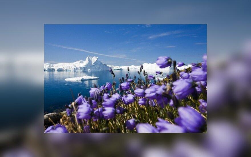 Tyrimas rodo, kad po 20-30 m. ištirps Arkties ledo kepurė