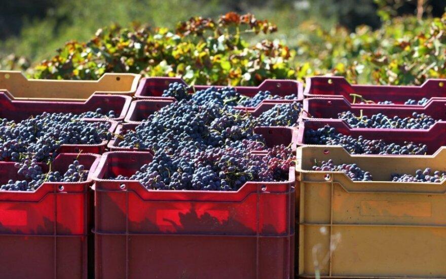 Cariñena - akmenų vyno gimtinė Ispanijoje