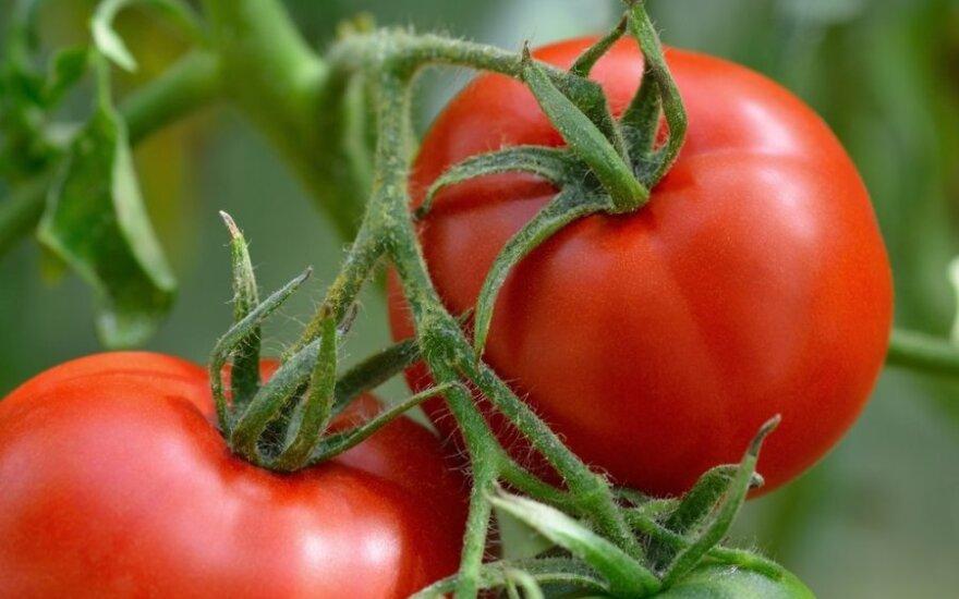 Priminimas daržininkams: pomidorai mėgsta sočiau pavalgyti