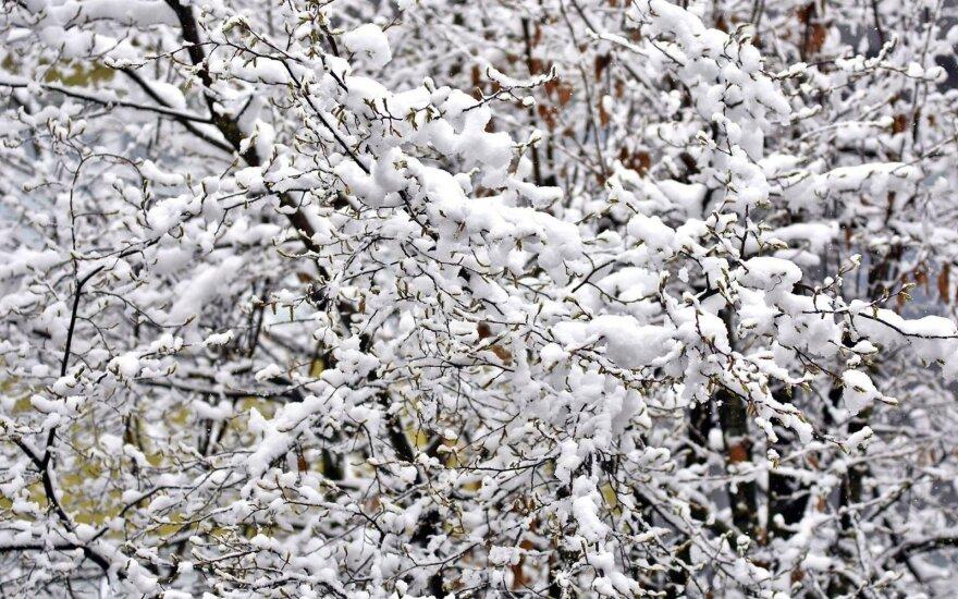 Fiksuok! Lietuvoje – pirmasis sniegas!