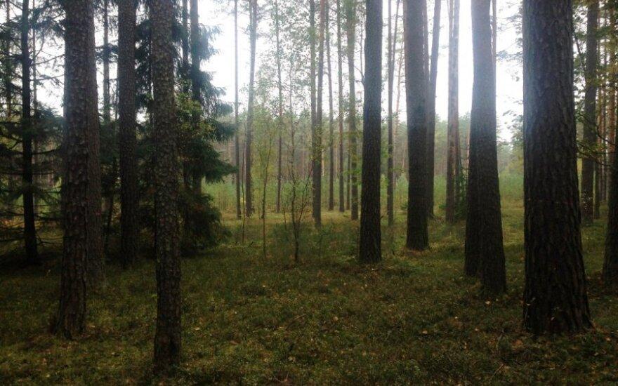 Kaip pažiūrėjus į medį nustatyti vietovės užterštumo lygį?