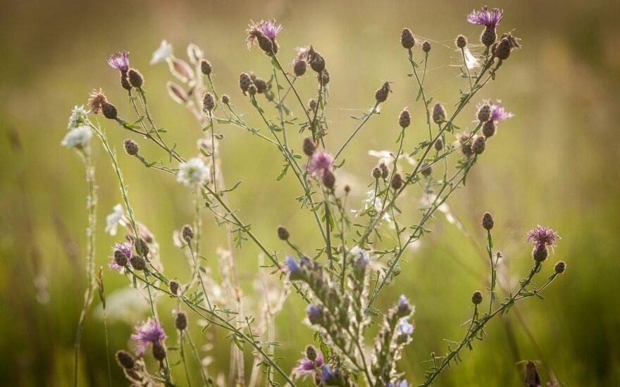 """Pakoreguoti """"Natura 2000"""" išmokų reikalavimai"""
