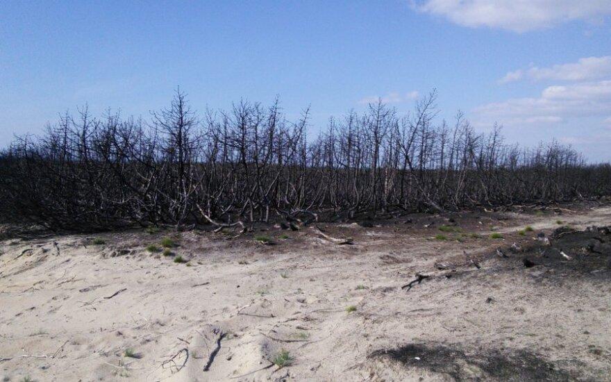 Išdegęs miškas Smiltynėje