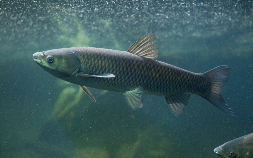 Įžuvina slapta, nes bijo, kad žuvis išgaudys