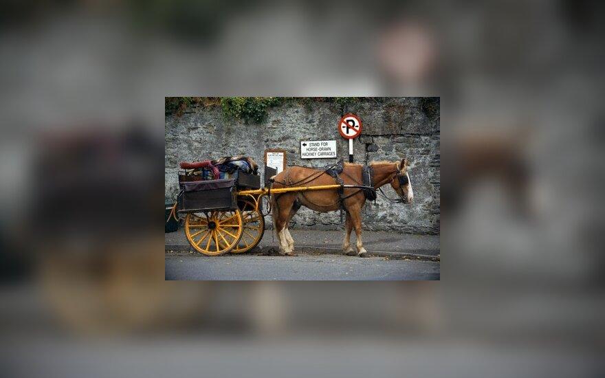 Arklys rėžėsi į autobusą – sužeistos 5 moterys