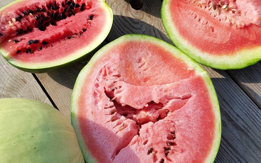 Lietuviški arbūzai