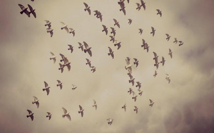 Kaip pabėgti nuo slegiančio rudens: patarimai