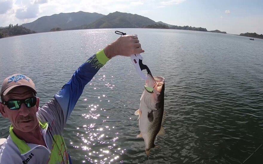KABLYS.lt Gyvai: basai ir Kuba – žuvis, dėl kurios verta trenktis per pusę pasaulio