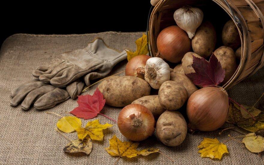 Svogūnai ir bulvės