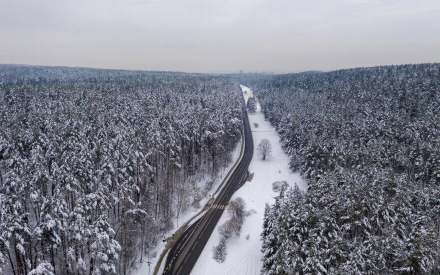 Trys metai po reformos: kaip pasikeitė valstybinis miškų sektorius
