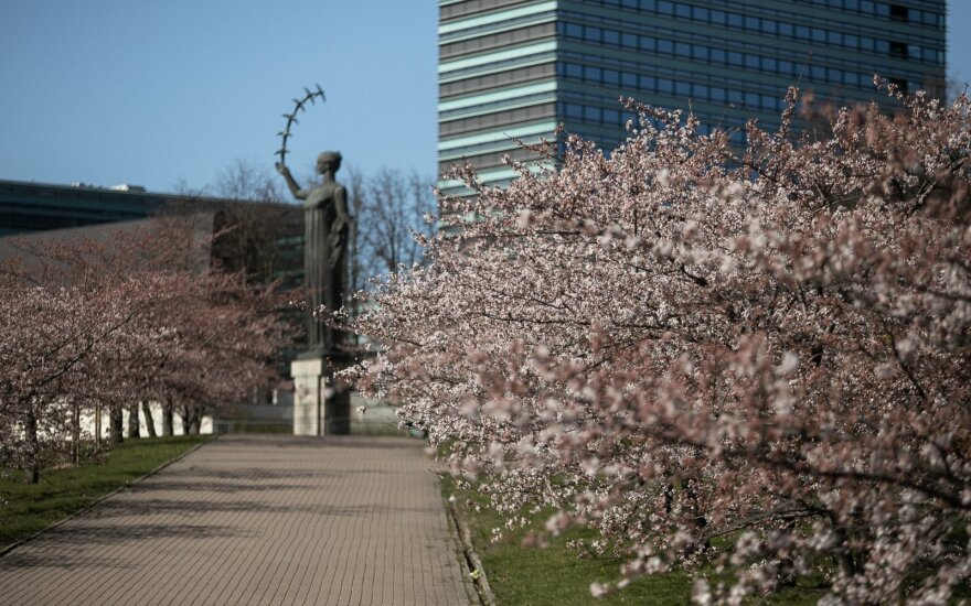 Stay at home: cherry blossom viewing without leaving sofa