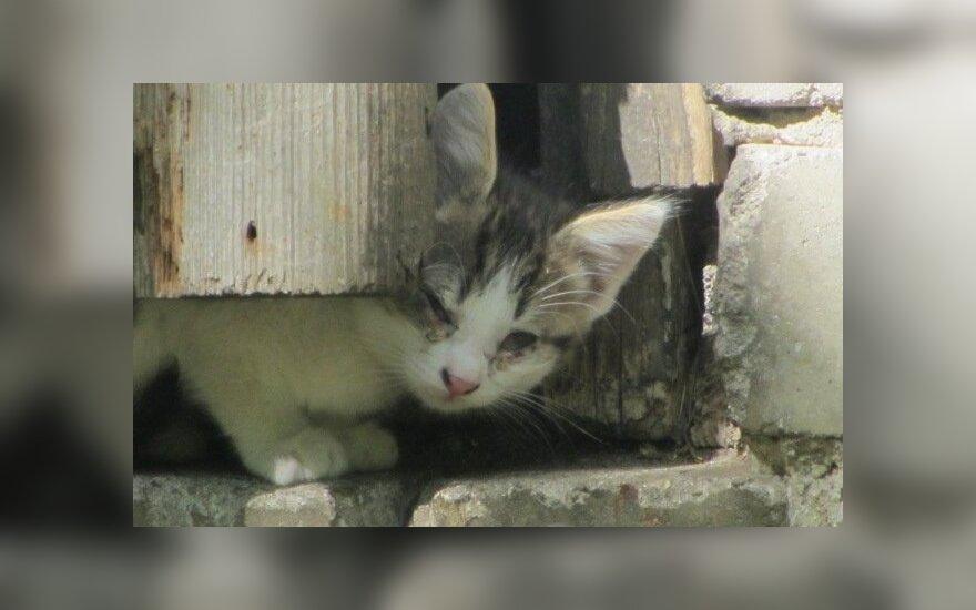 Gyvūnų globos draugija prašo pagalbos
