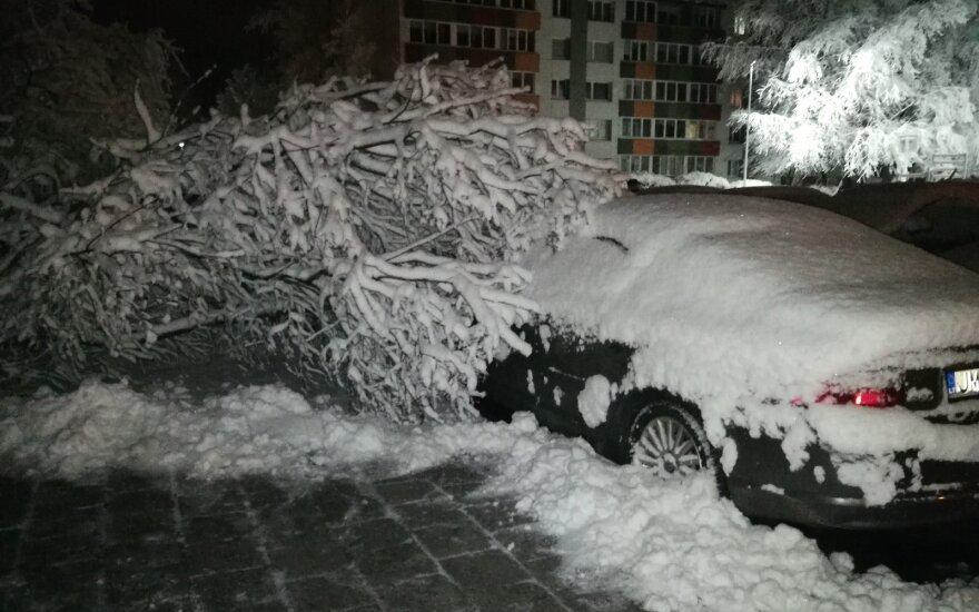 Vaizdai Klaipėdoje net atima žadą – sniego neatlaikę medžiai griuvo ant automobilių