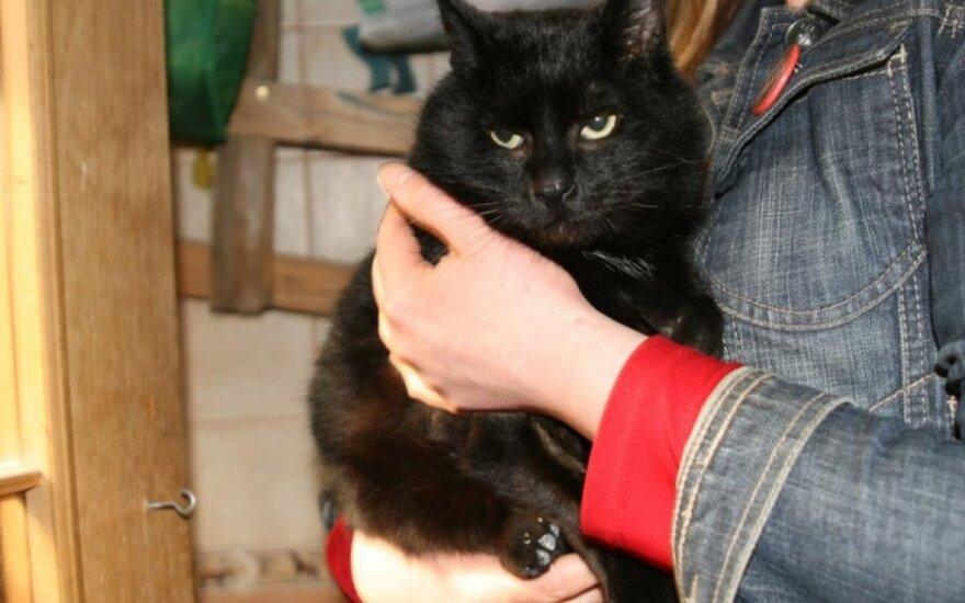 Visų draugas katinas Princas ieško namų ar bent globos