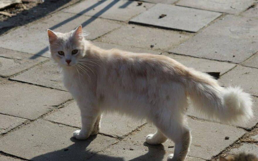 Gražuolis katinas Markizas ieško namų