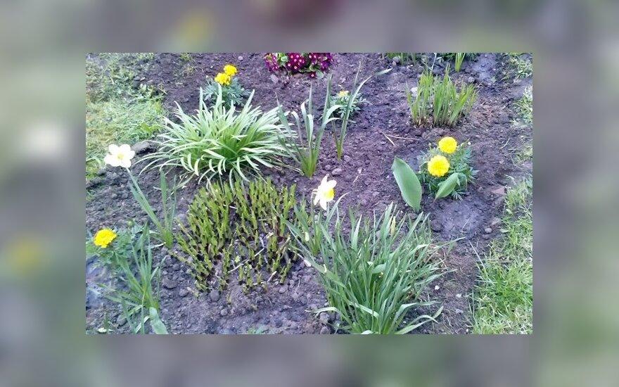 Namuose mokinių užaugintos gėlės – mokyklos kieme