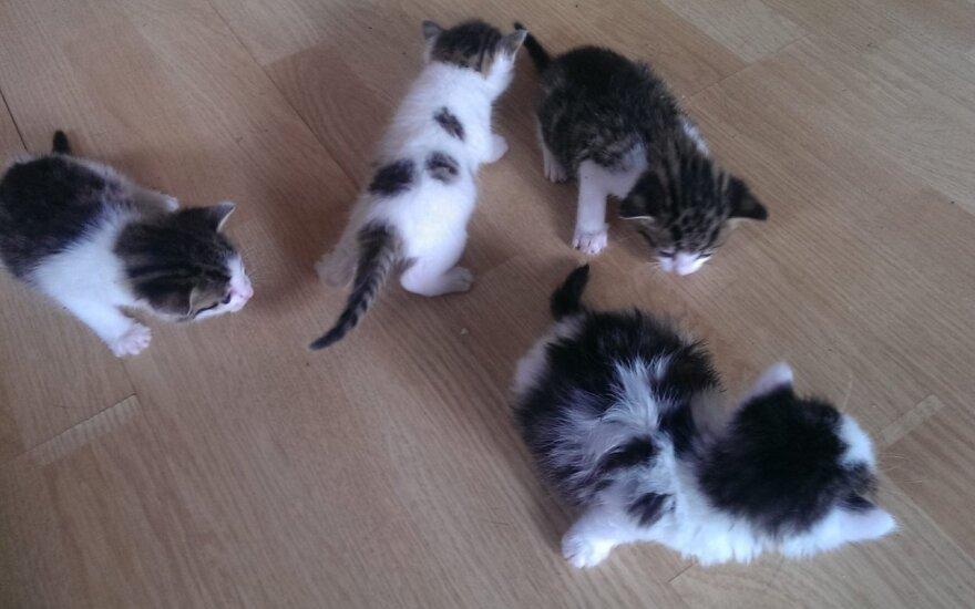 Mažos katytės ieško namų
