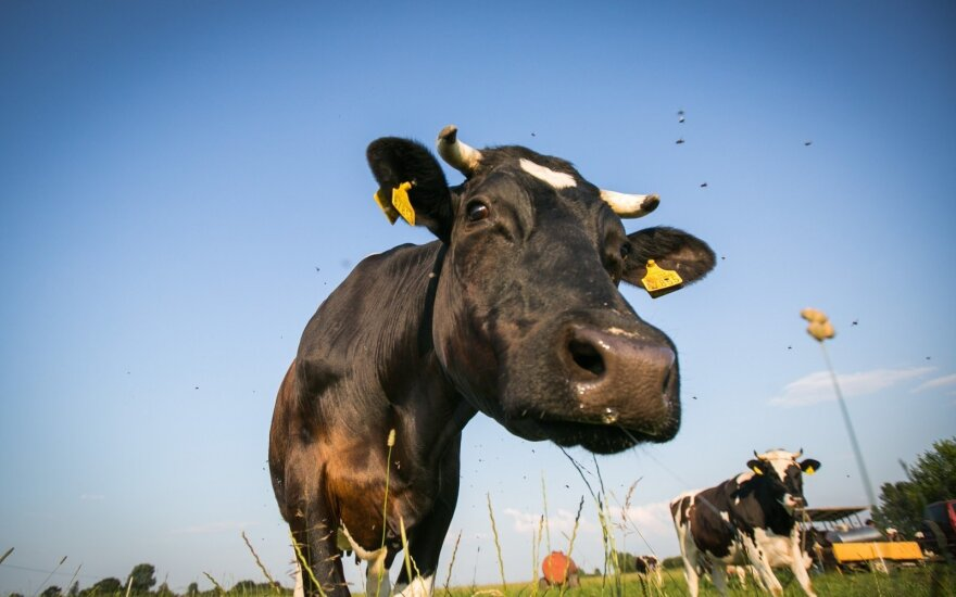 Lithuanian dairy farmers in for €24m support