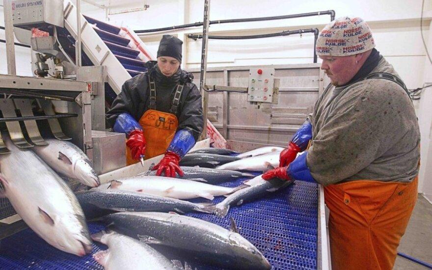 Darbuotojai Norvegijoje, žuvų pramonė