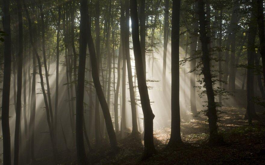 Rumunijos miške – itin mįslinga ir šiurpi nelaimė