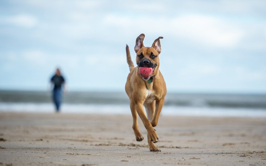 Šuo paplūdimyje