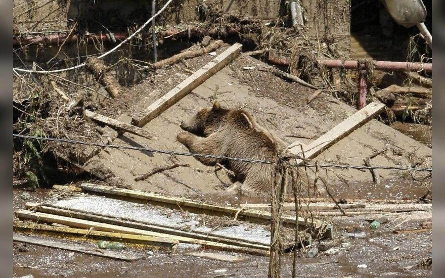 Tbilisyje gatvėmis blaškosi ištrūkę gyvūnai